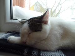 sleep: my NYE activity